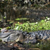 Alligator River Kayak Tours