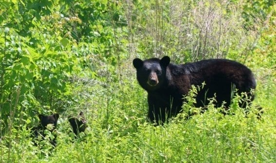 Outer Banks Bear Tours