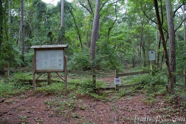 Kittyhawkwoodsmaritimeforest