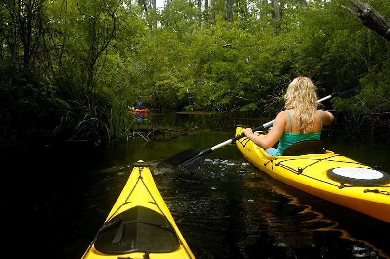 Alligator River Kayak Tour